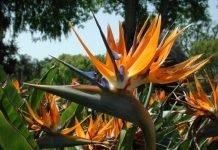 piante tropicali esterno